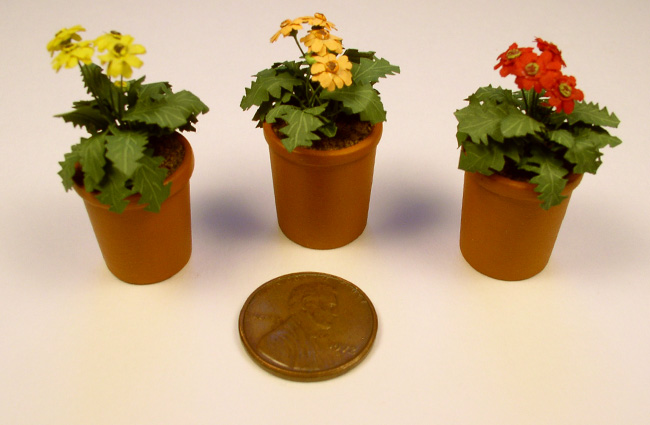 Three pots of Gerbera Daisies next to a penny for scale